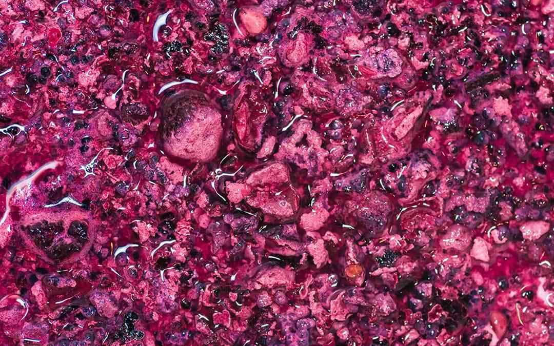 Cosa sono i lieviti del vino