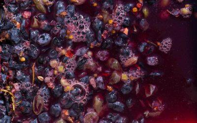 Cos'è la fermentazione alcolica del vino?