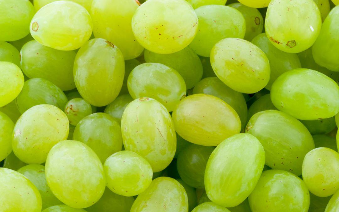 Come si chiama il chicco d'uva