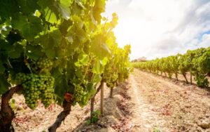 qual è la storia del vino