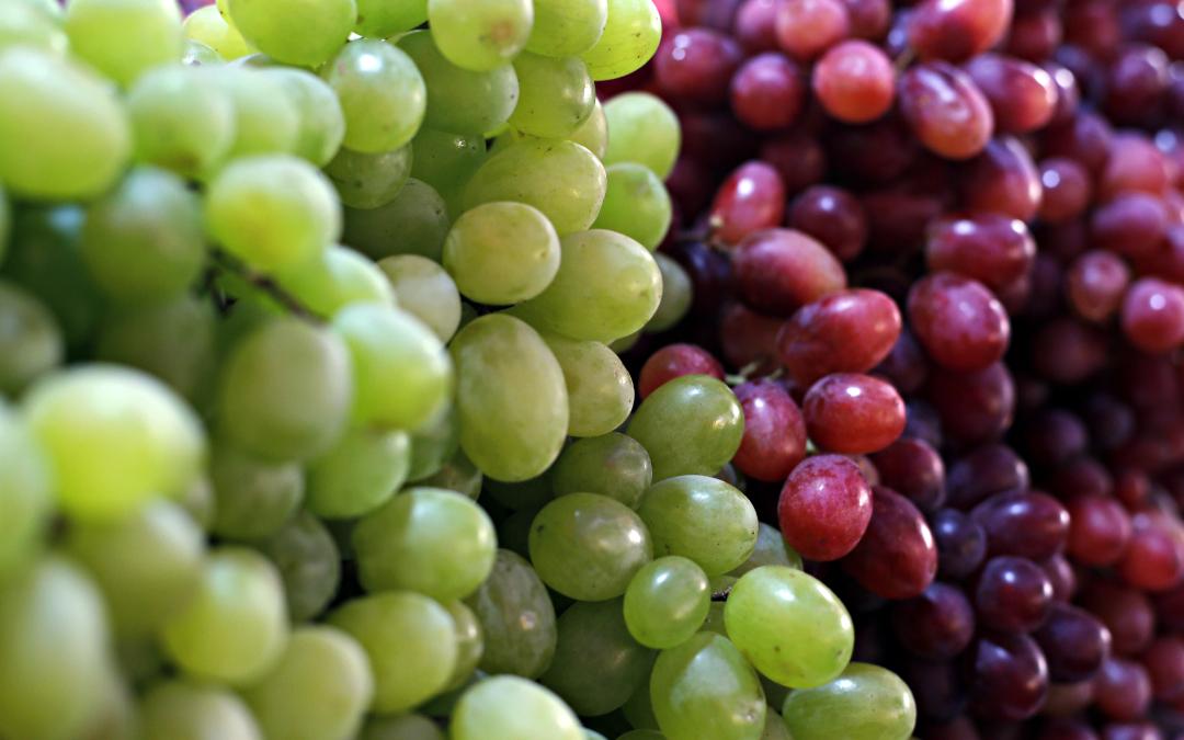 Dove vendere l'uva?